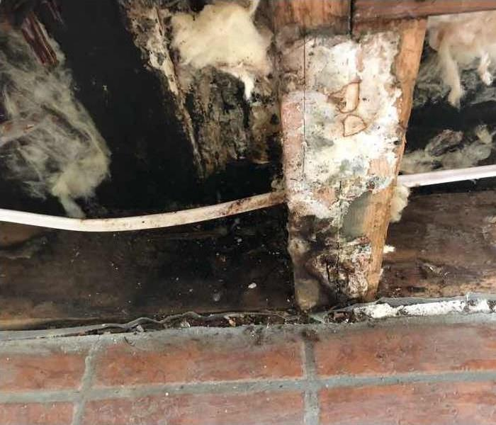 Roof Leak Causes Significant Mold in Spokane Home