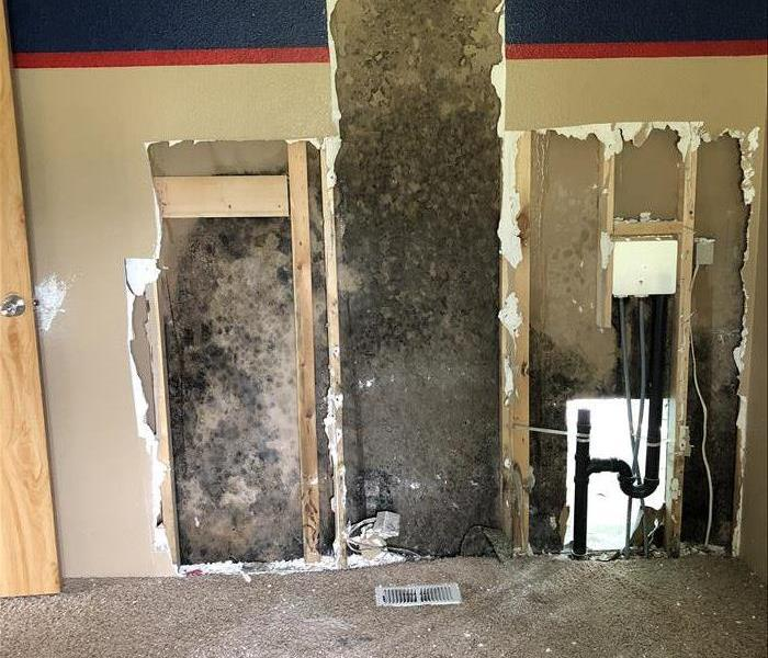 Mold Remediation in Spokane, WA