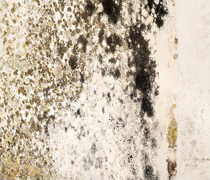 Mold Remediation How To Choose The Right Dehumidifier To Help Prevent Mold Damage In Spokane