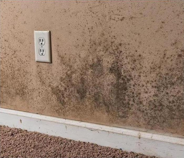 Mold Remediation Cleaning and Removing Mold From Spokane Homes