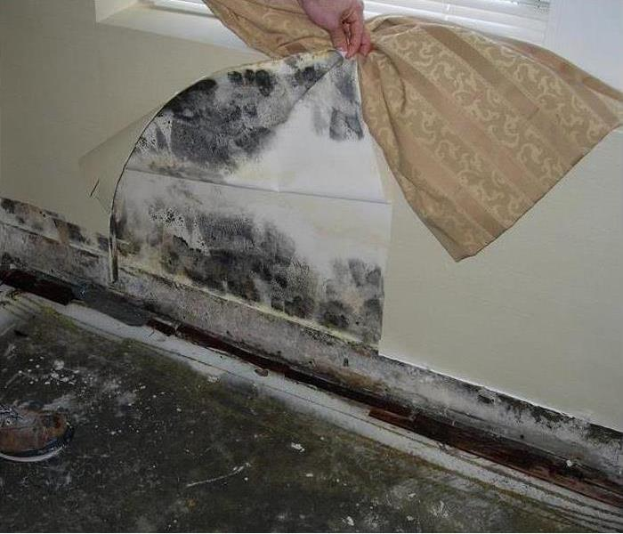 Mold Remediation Mold: Myths, Facts and Solutions
