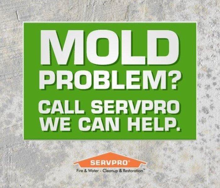 Mold Remediation Ten Things You Should Know About Mold In Spokane
