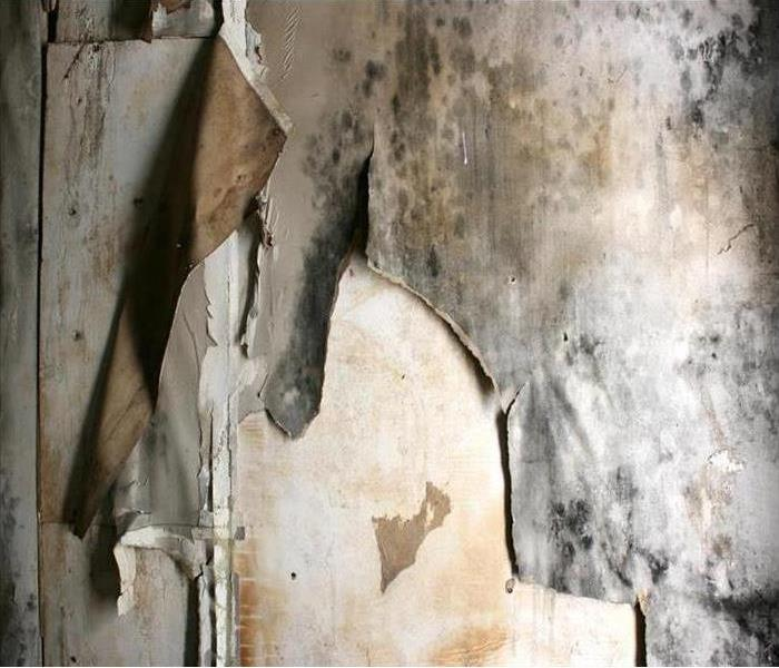 Mold Remediation Mold Damage Remediation Services in Spokane